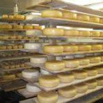 De Boer Op BV bied u ook verschillende producten die u kunt gebruiken voor het maken van kaas